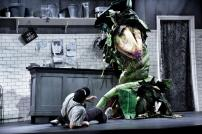 Little Shop of Horrors (7)